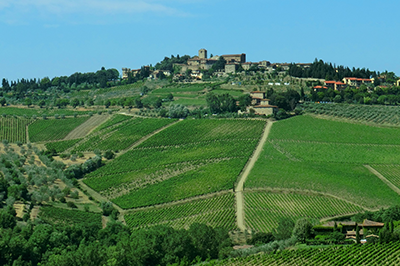 transfer-and-tours-cortona-Chianti-Wine-Tour-Panzano-in-Chianti