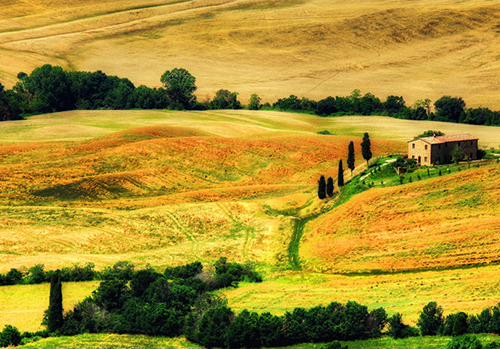 transfer-and-tours-cortona-siena-summer-in-Toscany1
