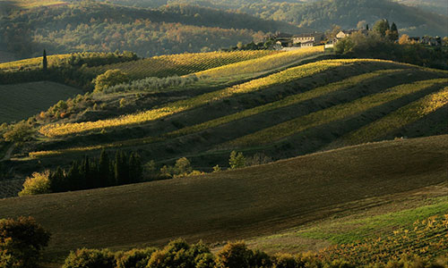 Transfer And Tours Cortona Tourist Guide Chianti