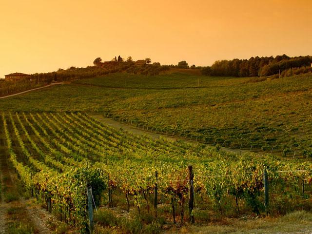 Transfer-And-Tours-Cortona-Tourist-Guide-Chianti-Vineyard-Sunset-Landscape