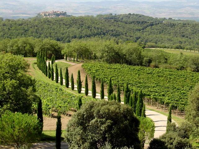 Montalcino-Landscape