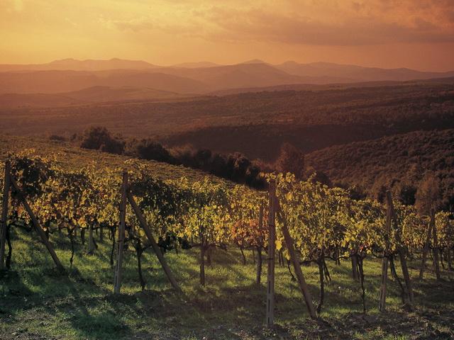 Montalcino-Vineyard