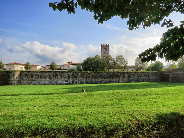 lucca-w-6