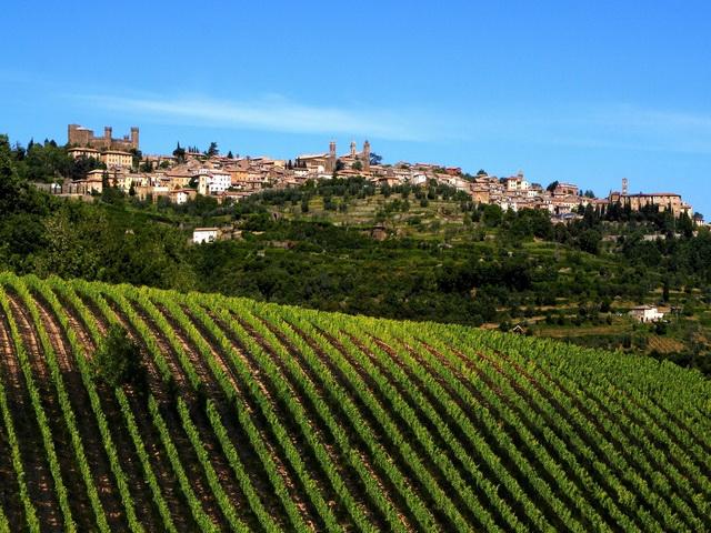 montalcino-vineyard-