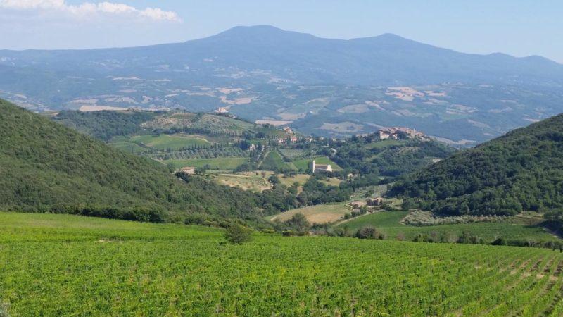 Montepulciano 16